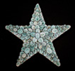 Limpet Star